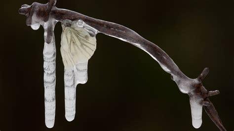 spinnen in der wohnung bekämpfen pflanzen gegen spinnen pflanzen gegen insekten spinnen vertreiben bek mpfen hausmittel gegen