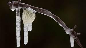 Ameisen Im Winter : kampf gegen den k ltetod wie berwintern spinnen und insekten welt der wunder tv ~ A.2002-acura-tl-radio.info Haus und Dekorationen