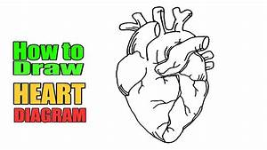 How To Draw Heart Diagram Easily