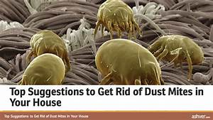 Top Suggestions to Get Rid of Dust Mites in Your House ...