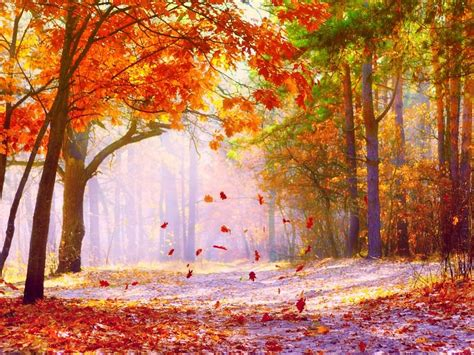 Fall Backgrounds For Desktop Computers by 20 Fall Wallpapers Backgrounds Images Freecreatives