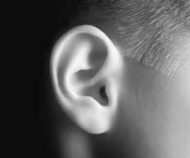 Image result for ear + image