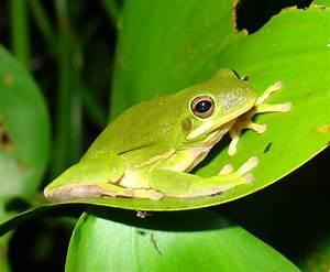 Class Amphibia Examples | www.pixshark.com - Images ...