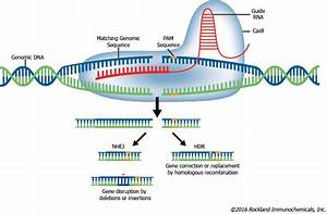 Gene Editing Services