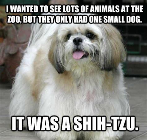 pawful dog puns   time barkpost