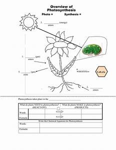 Photosynthesis  U0026 Cellular Respiration Reading