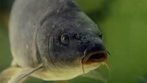 Fisch Mit H : wie gut ist unser fisch lebensmittel check mit tim m lzer ard das erste ~ Eleganceandgraceweddings.com Haus und Dekorationen
