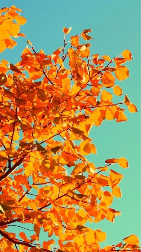 Fall Backgrounds For Iphone Aesthetic by 135 Best Backgrounds Images On Time