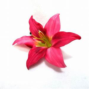 Pink lily clipart - Clipground