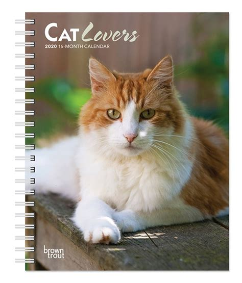 cat lovers weekly engagement calendar animals