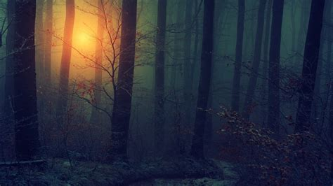 fog forest during sunset hd aesthetic wallpapers hd
