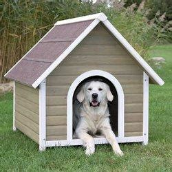 Dog Kennel in Faridabad, Haryana