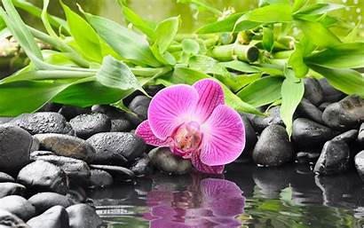 Zen Buddhism Stones Flowers