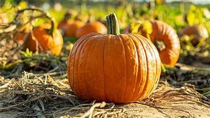 Vegetable Pumpkin Autumn Harvest
