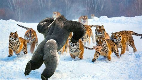 Most Amazing Wild Animal Fights