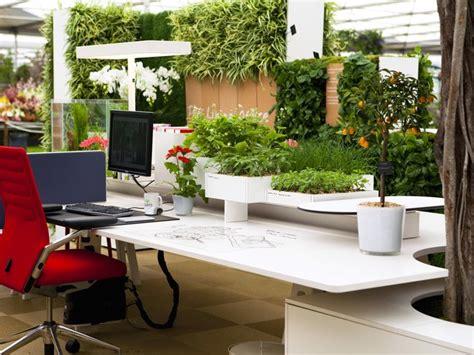 plantes pour bureau la nature au travail ma plante mon bonheur