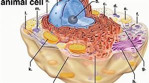 Animal Cell Parts Quiz