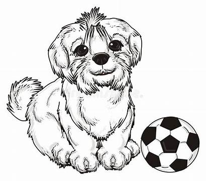 Dog Maltese Ball Fluffy Sit Cartoon Soccer