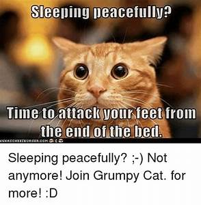 Funny Grumpy Cat and Sleeping Memes of 2016 on SIZZLE