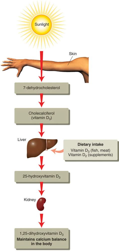 what is the best form of vitamin d nutrients important for bone health