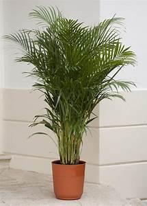 Plante D Intérieur Haute : plante d polluante 10 plantes qui am liorent l 39 int rieur ~ Dode.kayakingforconservation.com Idées de Décoration