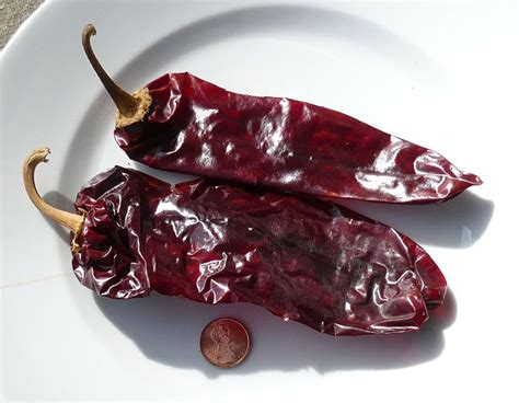 are ancho chiles texas chili with ancho chiles with or without beans cat s kitchen