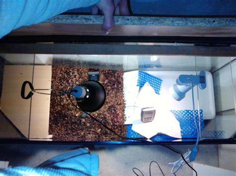 am 233 nagement d un terrarium pour tortue palustre