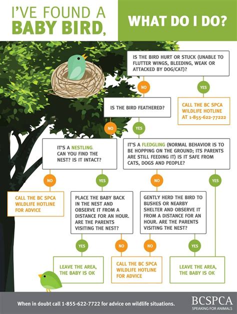 what should you do if you find a baby bird