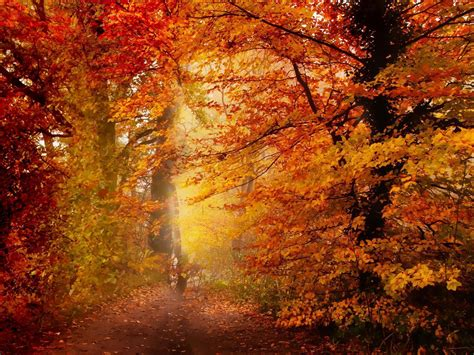 Fall Backgrounds Free by New Fall Wallpapers Wallpaper Cave