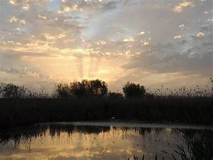 Free, Images, Landscape, Tree, Nature, Marsh, Cloud, Sky, Sun, Sunrise, Sunset, Mist, Sunlight