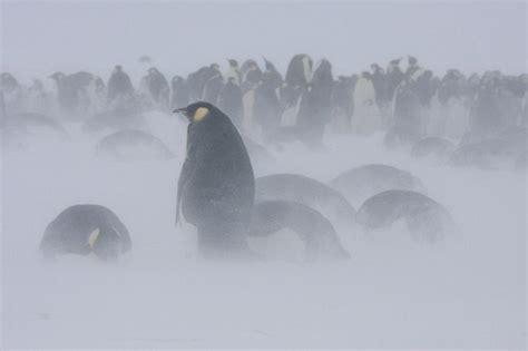blizzard antarctica  word  weather
