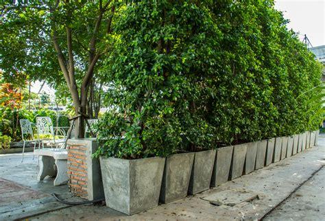 Pflanzen Als Sichtschutz Für Terrasse by Sichtschutz Aus K 252 Beln 187 So Bauen Sie Eine Wand Aus Pflanzen