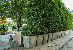sichtschutz aus kubeln so bauen sie eine wand aus pflanzen With pflanzen sichtschutz terrasse kübel