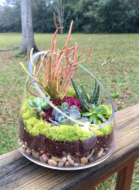 Succulent Garden In Glass Container  My Garden Your Garden