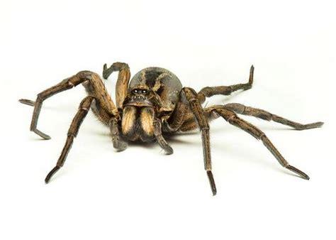 harry potter   hobbit   spiders