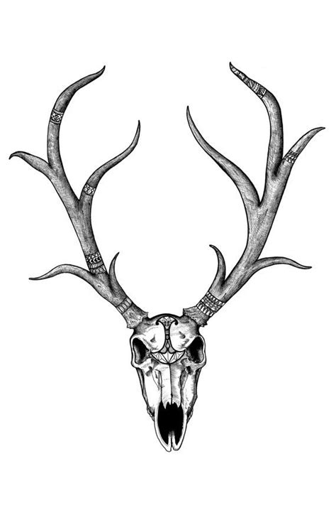 diplomatic deer skull deer skull black  white