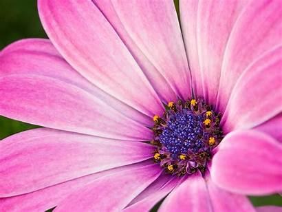 Roze Wallpapers Achtergronden Close Desktop Flower Flowers
