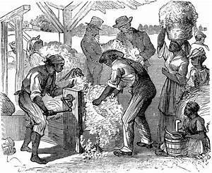 King Of Cotton : march 14 eli whitney patents the cotton gin today in ~ Nature-et-papiers.com Idées de Décoration