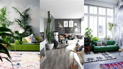 decorate living room  indoor plants greenery living room design ideas youtube