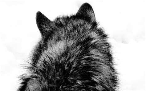 wolf head wallpaper gallery