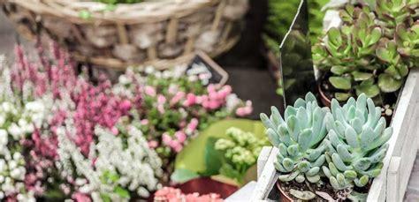 fiori per terrazzi al sole piante da balcone resistenti con piante resistenti al sole