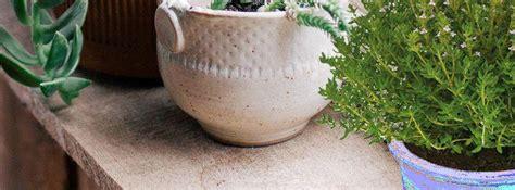 thym en pot entretien culture du thym en pot 28 images thym citron culture entretien utilisation en cuisine thym