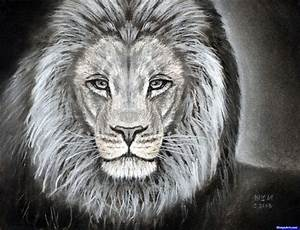 Learn How to Sketch a Lion, safari animals, Animals, FREE ...