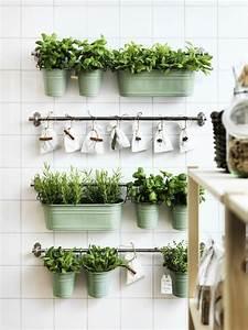 Herbes Aromatiques En Pot : des herbes aromatique disposition cuisine mur v g tal ~ Premium-room.com Idées de Décoration
