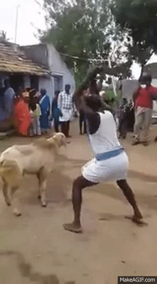 animal slaughter  funny  wired animal goat attack
