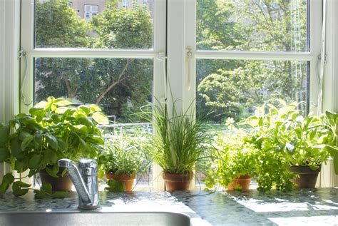 Indoor Garden by Indoor Herb Garden Grow One On Your Own With These Tips