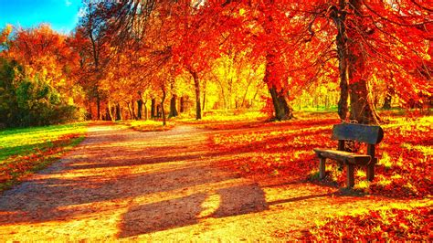 Autumn Season Fall Color Tree Forest Nature Landscape