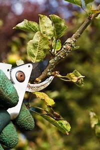Bäume Verschneiden Obstbäume : s ulenobst pflanzen schneiden und sorten empfehlungen ~ Lizthompson.info Haus und Dekorationen