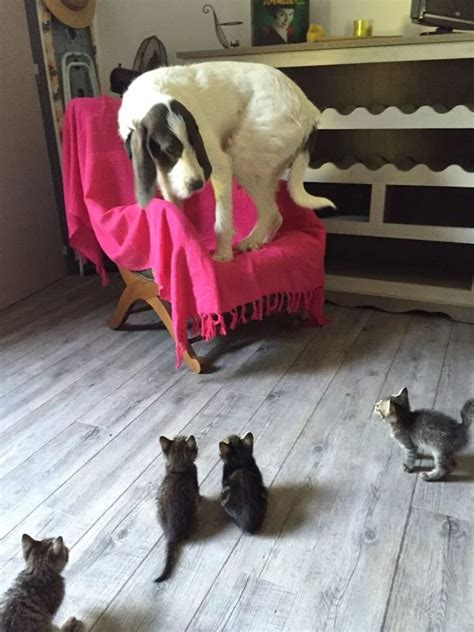 dogs dog cats funny cat kittens animal cute animals kitten terrified things scary puppy pets blazepress hilarious adorable kitty
