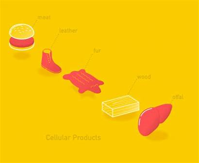 Agriculture Cellular Production Animal Processes Defining Closer